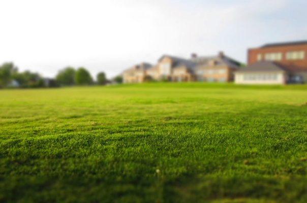 graszoden plaatsen