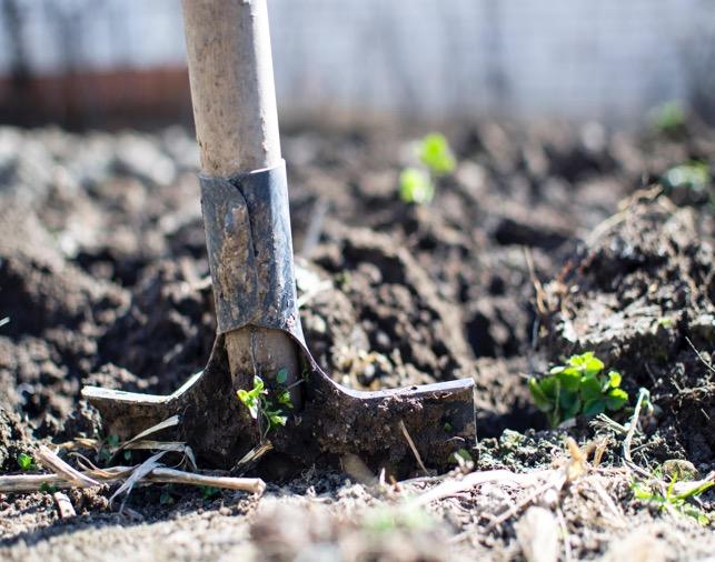 Stappenplan voor een tuinrenovatie