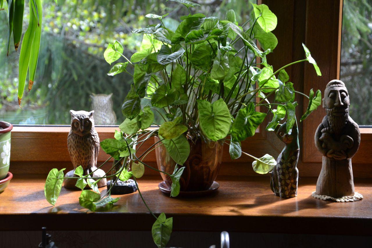 Waar kan ik grote kamerplanten kopen