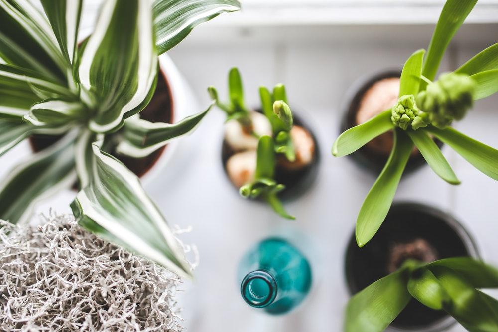 Gezondheidsvoordelen planten huis