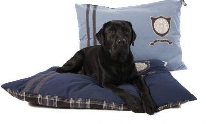 Woonaccessoire tip voor hondenbezitters