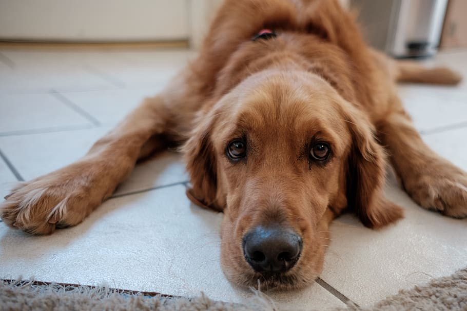Hond schuift over grond, wat is dat?