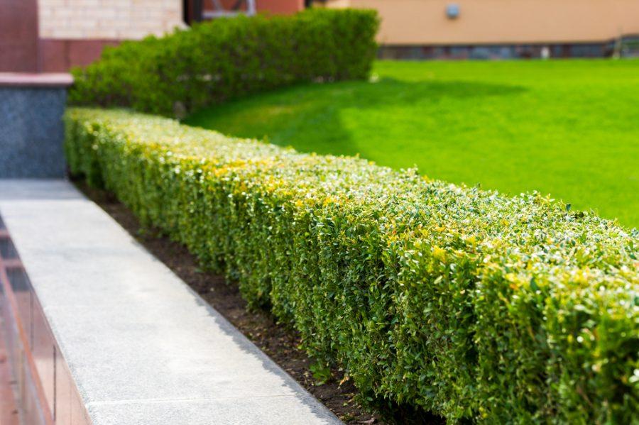 3 tips bij het creëren van een onderhoudsvriendelijke tuin