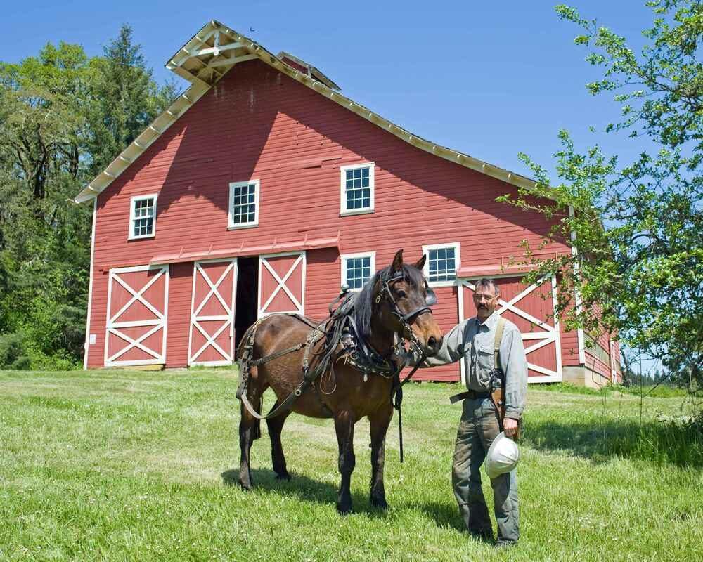 Paard aan huis of in een pensionstal