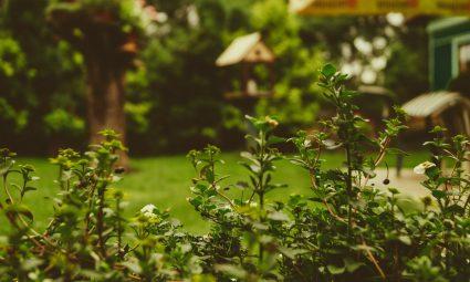 Zo geef jij je tuin een geweldige make-over