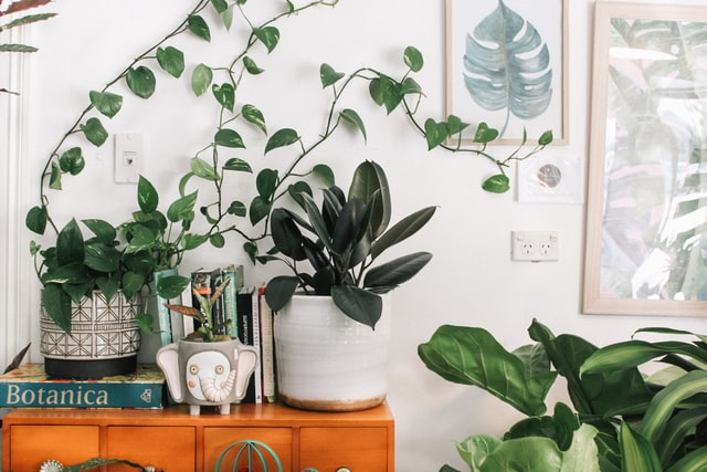 Zo vind je de perfecte bloempot voor jouw kamerplant
